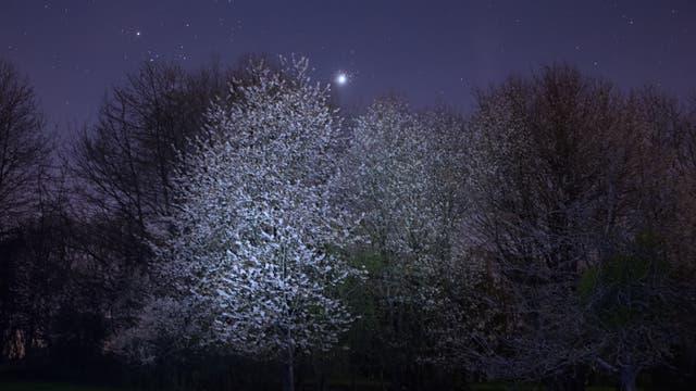 Die Plejaden, die Venus und der Frühling