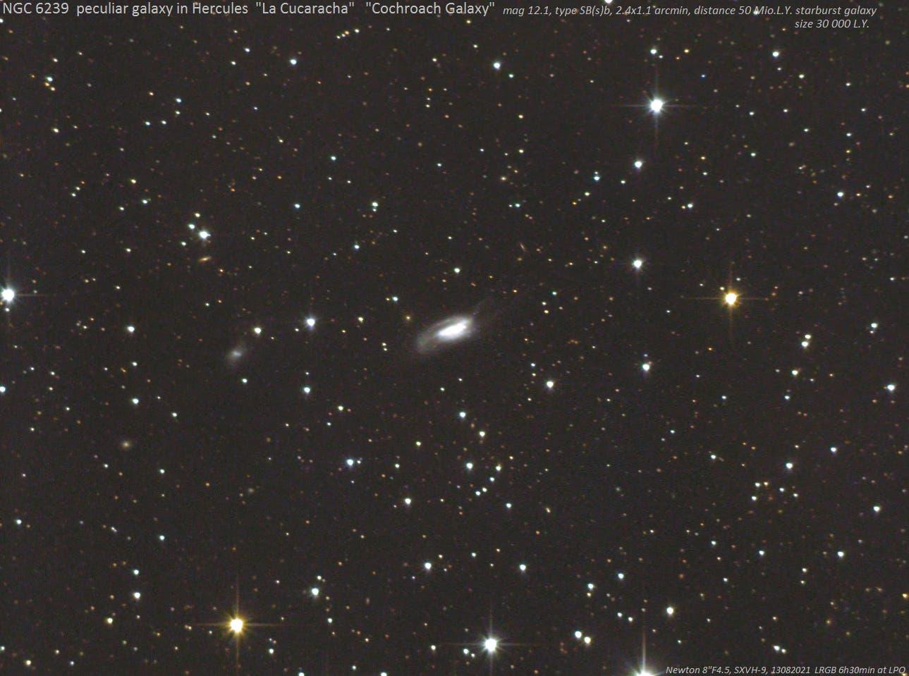 """NGC 6239 (""""Cockroach Galaxy, """"La Cucaracha"""") (2)"""