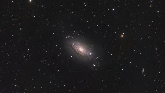 Sonnenblumen-Galaxie