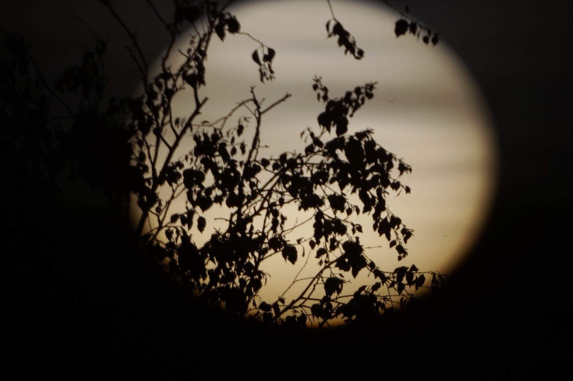 Irdische Sonnenflecken - Blätter im Sonnenuntergang