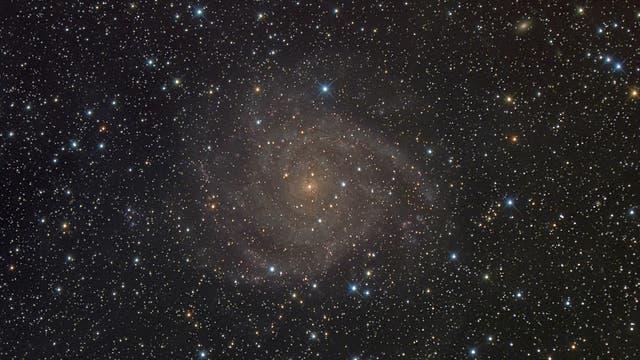 IC 342, eine verborgene Galaxie