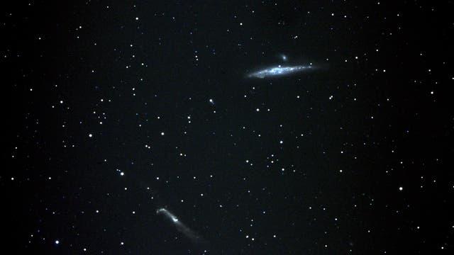 NGC 4631 Walfischgalaxie und Nachbarn
