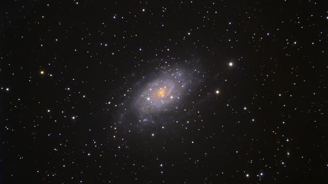 Die Galaxie NGC 2403