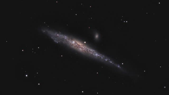NGC 4631 - Walgalaxie