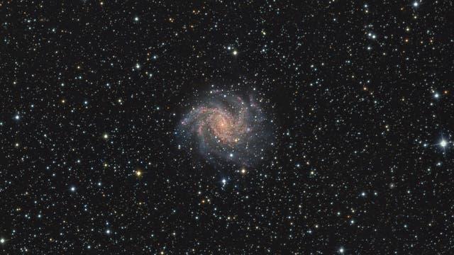 NGC 6946 - Feuerwerk-Galaxie in der Übersicht