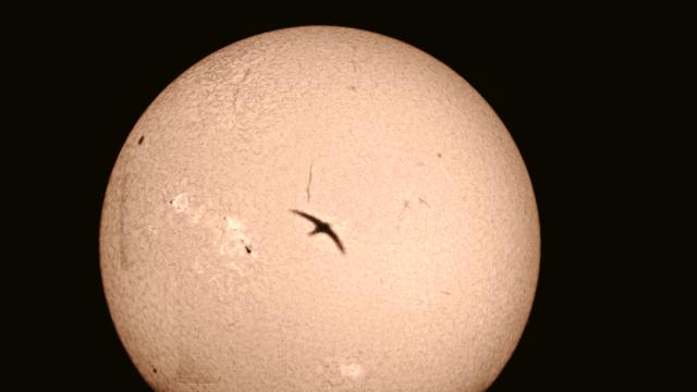 Schwalbenflug vor H-alpha-Sonne