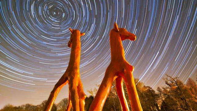 Giraffen-Spuren