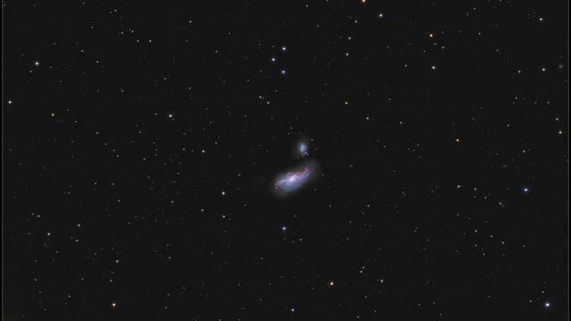 Arp 269: Kokon-Galaxie NGC 4490 und NGC 4485