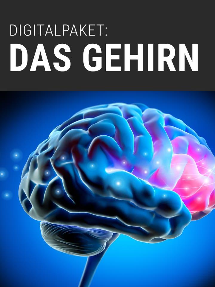 Spektrum.de Digitalpaket: Das Gehirn