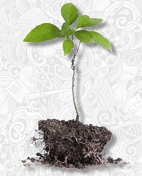 10 Baumsetzlinge - BUND-Initiative