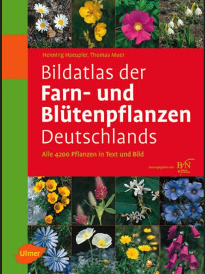 Haeupler/ Muer  : Bildatlas der Farn- und Blütenpflanzen Deutschlands