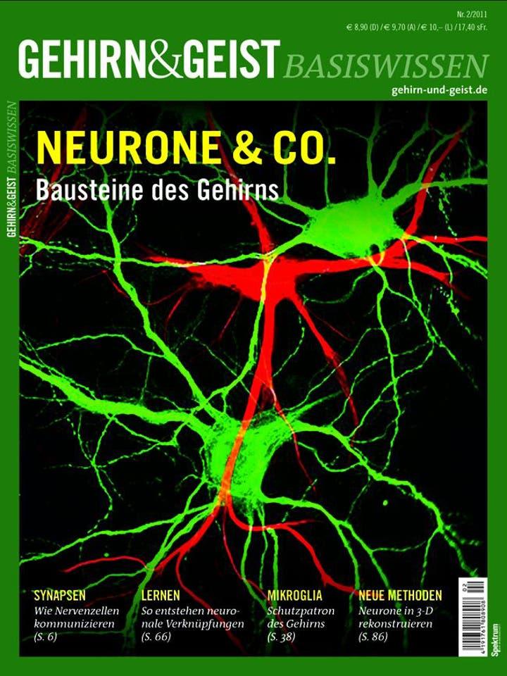 Gehirn&Geist Basiswissen Teil 4 <br /> Neurone & Co.