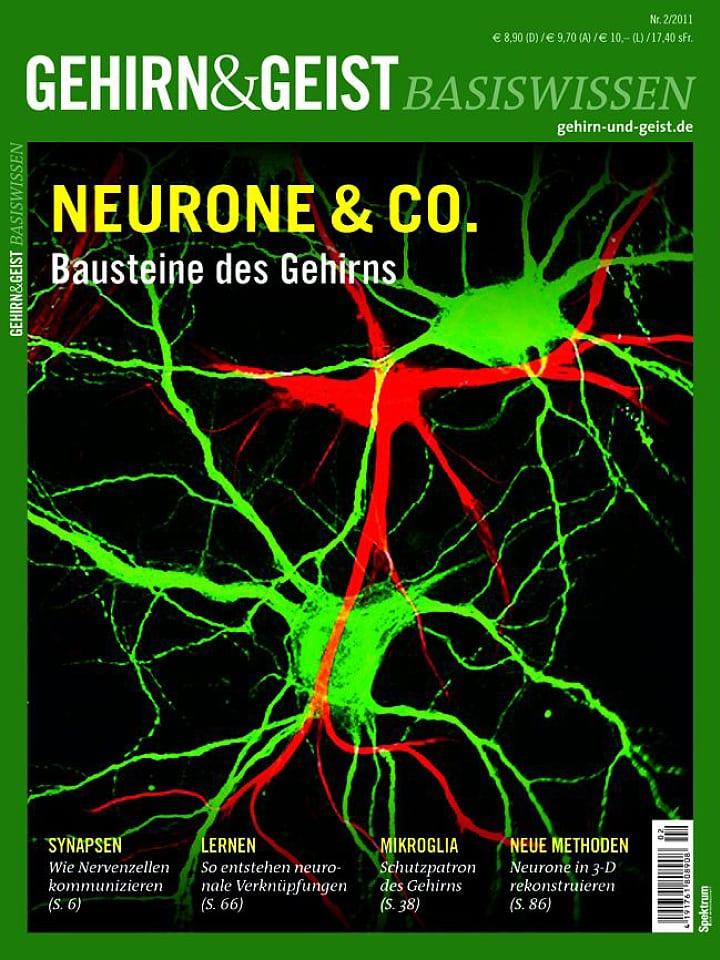 Heftcover Gehirn&Geist Basiswissen Teil 4  Neurone & Co.