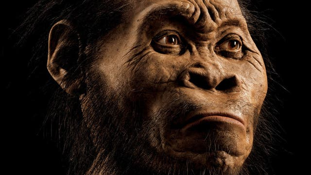 Rekonstruktion von Homo naledi