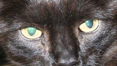 Nachtaktive Katze