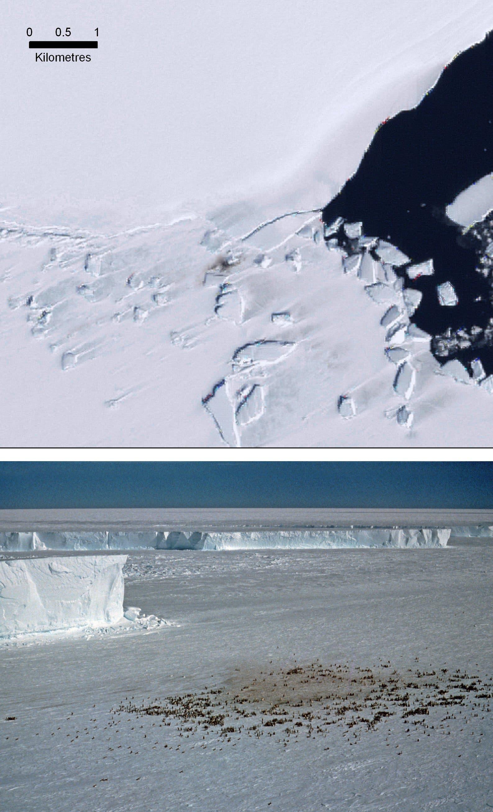 Verräterische Spuren: Pinguinkot auf dem Eis