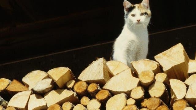 Katze auf Holzstoß