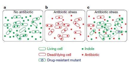 Altruistischer Schutz einer Bakterienkolonie