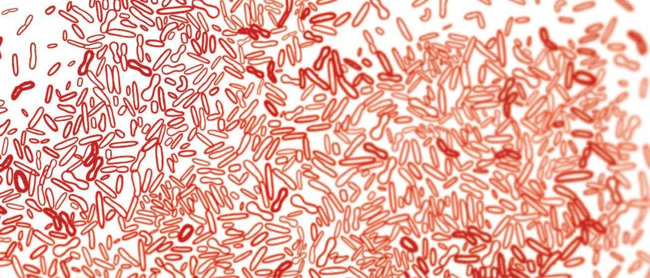 Bakterienkolonie