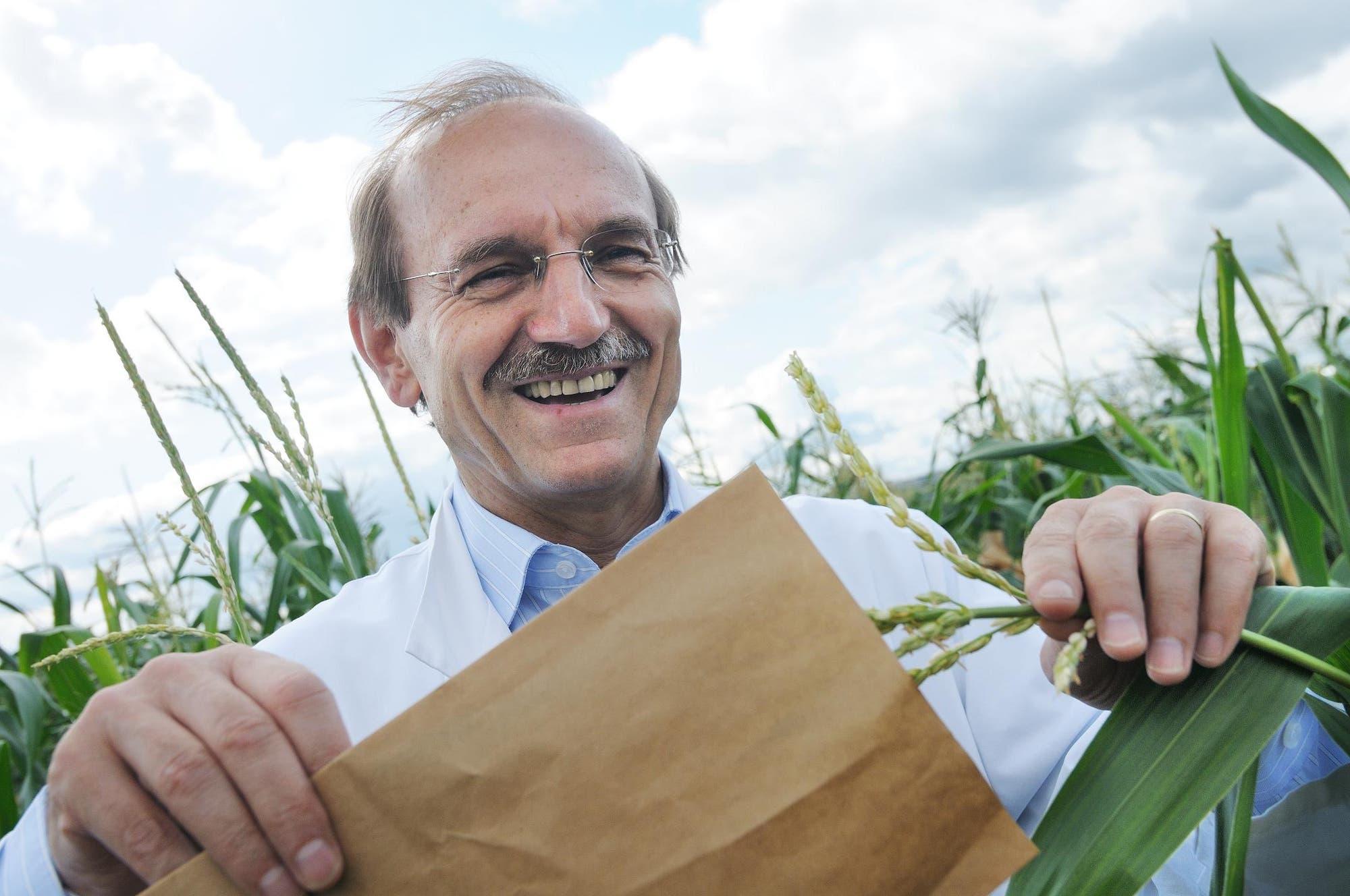 Albrecht Melchinger bestäubt Maisstauden mit sich selbst.  ...