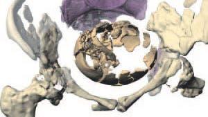 Geburt eines Neandertalers