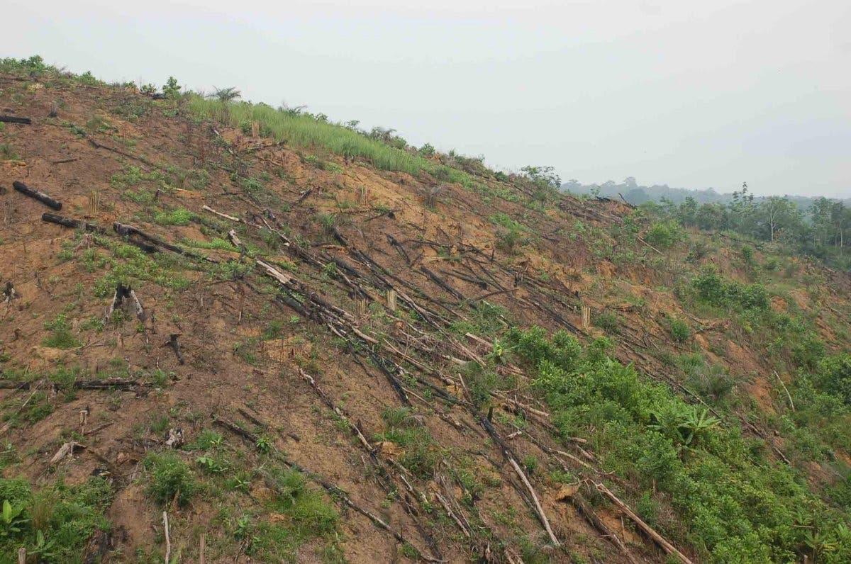 Abholzung auf Sumatra