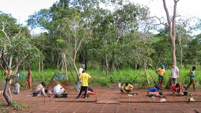 Im Dschungel Brasiliens...
