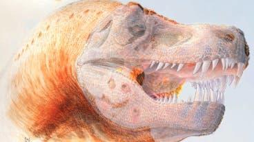 Infizierter T. rex