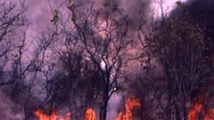 Savannenbrand