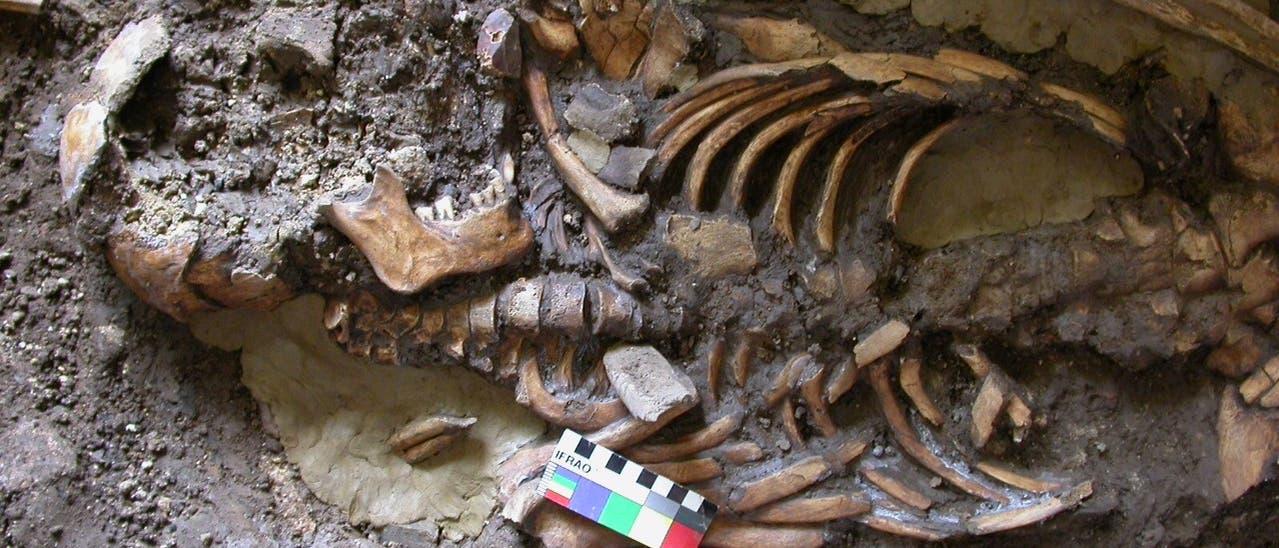 Erbgut aus den Knochen alter Kaukasier