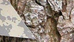 Mottenattrappe auf Baumrinde