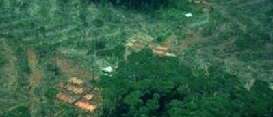 Kahlschlag am Amazonas