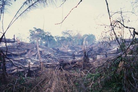 Brandrodung im Regenwald