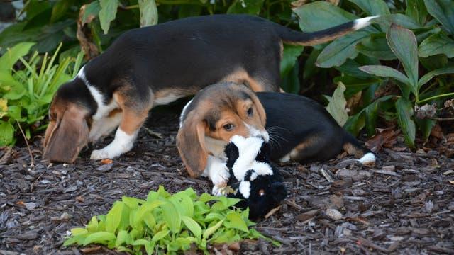 Erste Hundewelpen aus der Retorte