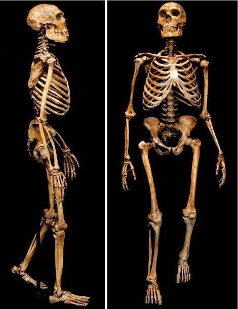Ansicht eines Neandertalers