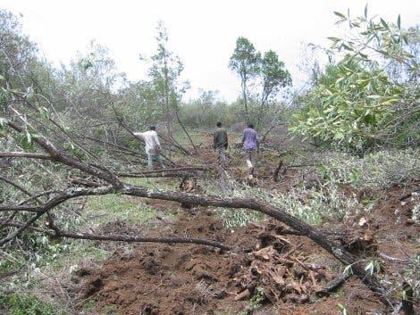 Waldrodung zur Holzkohleherstellung