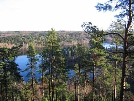 Urwald in Finnland
