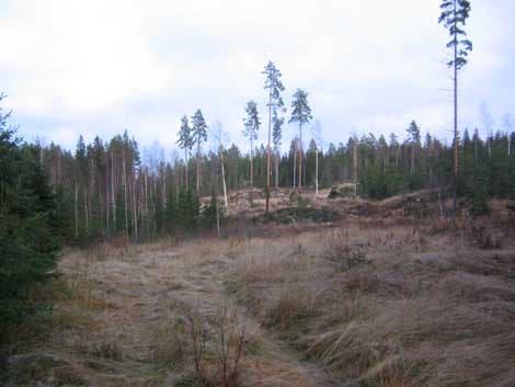 Waldregeneration nach Kahlschlag