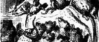 Ratten: das Musterbeispiel tierischer Invasionen