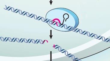 Bakterielle DNA-Abwehr