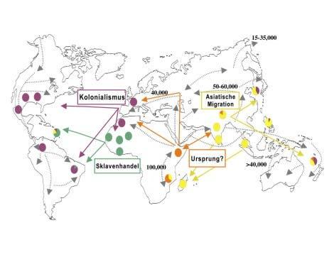 Globale Ausbreitung der Leprastämme