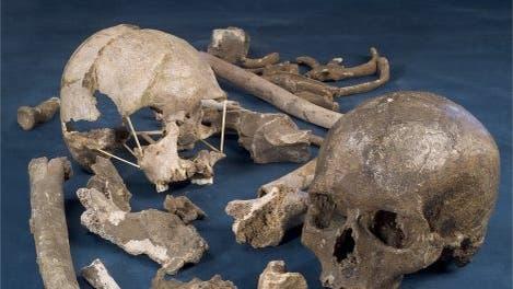 Fossilien von Mladeč