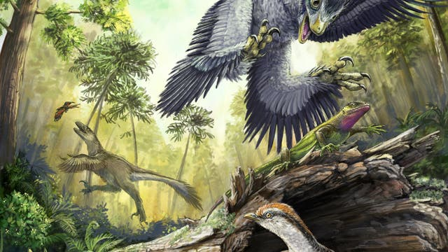Vögel aus der Kreidezeit
