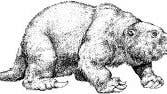 Ein Vertreter der Megatheriidae (Riesenfaultiere)