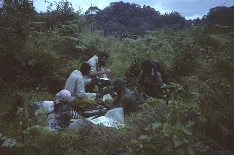 Botaniker bei der Arbeit