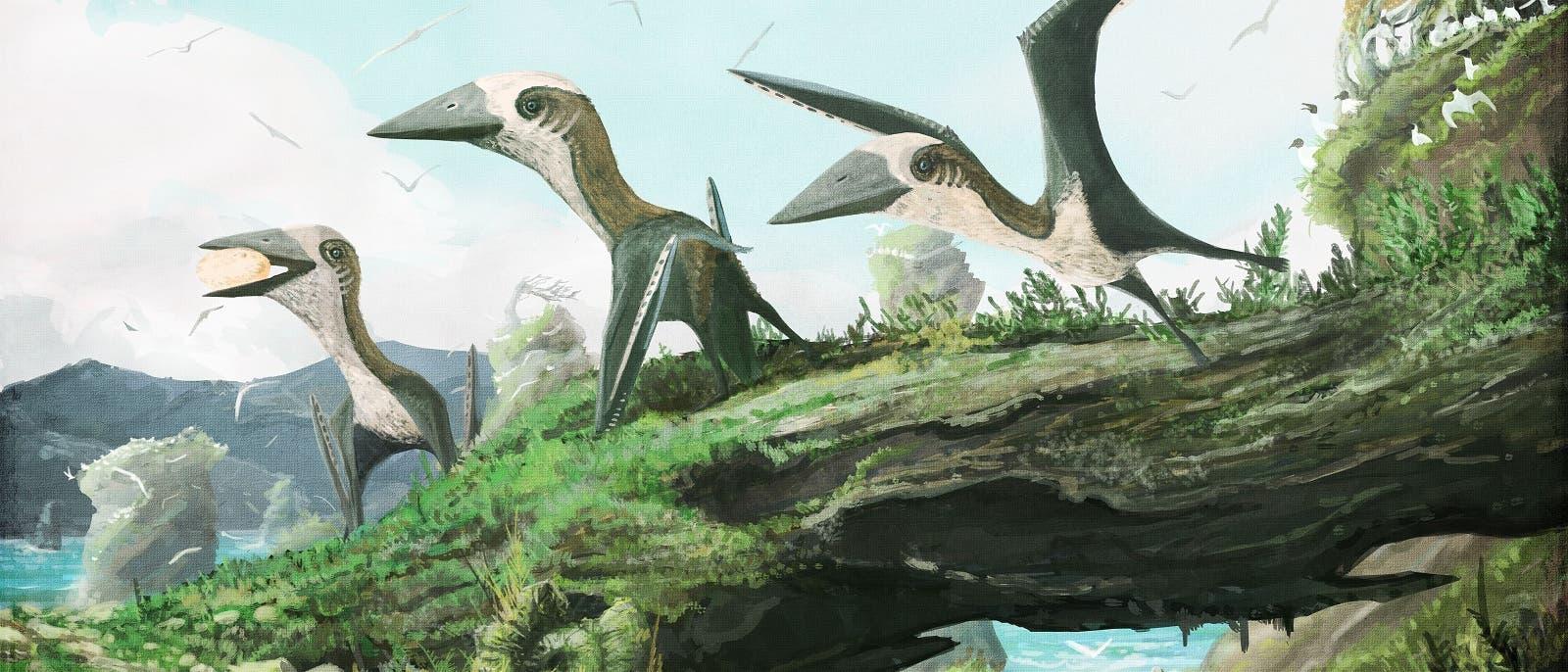 Flugsaurier aus der Gruppe der Azhdarchoidea