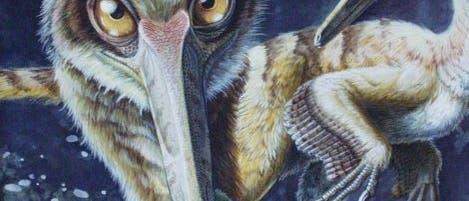 Illustration eines Buitreraptor Dinosauriers
