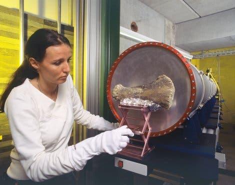 Diplodocus Halswirbelknochen vor dem Neutronen-Beschuss