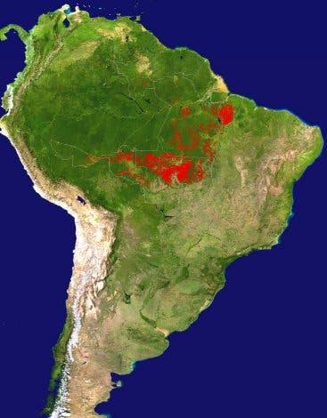 Holzeinschlag in Brasilien