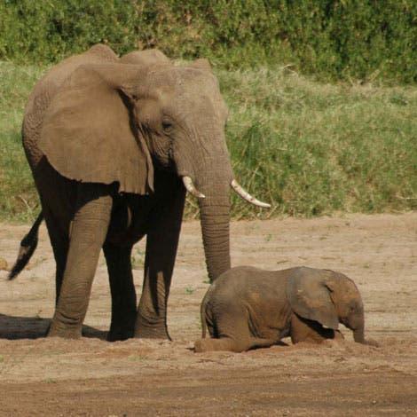 Elefanten im kenianischen Samburu Nationalpark